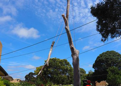 High work takes skill and experienced - Tree Removal