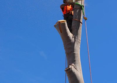 Rope & Pully system essential for controlled tree trunk descent