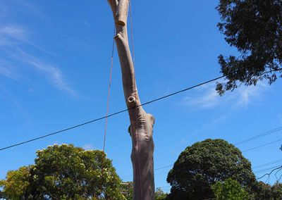 Main Tree Trunk dismantling southern Areas