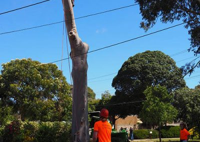 Lowering Trunk - Central Trees