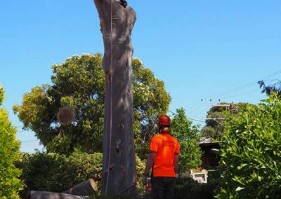 Heavy Branches Removed - Central Trees southern Areas Adelaide
