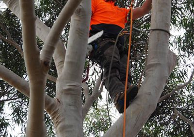 Head For Heights - Tree Lopping