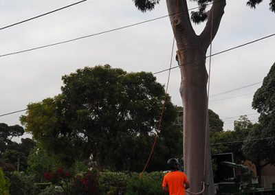 Completely Safe Work Practices for Tree Removal