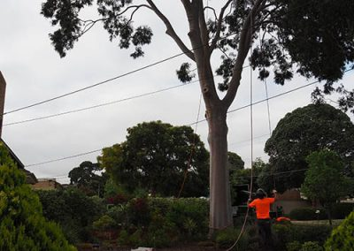 No Property Damage - Tree Removal Central Tree & Stump Removals