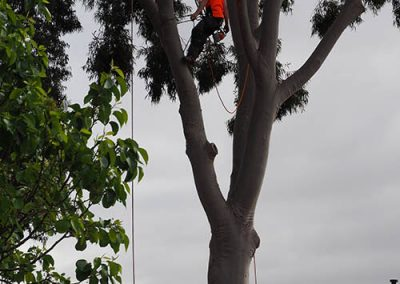 fully insured tree removal experts