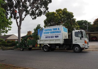 Tree & Stump Removal Experts Southern Areas