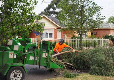 Mulching small branches and leaves Central Tree & Stump Removal