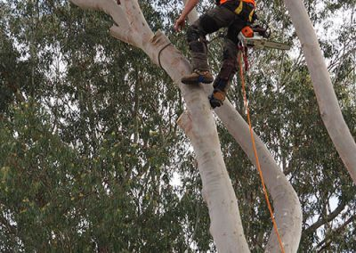 Tree Safety Harness - Vital WH&S