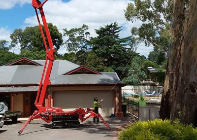 Central Tree Care 34