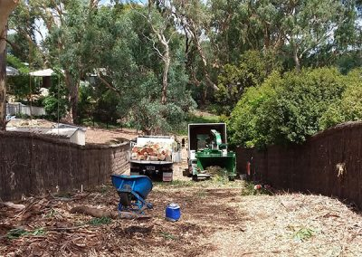 Central Tree Care 35