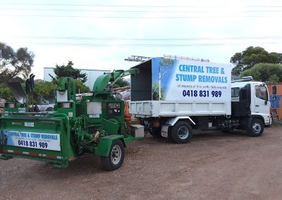 Central Tree Care 41